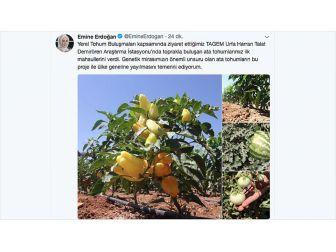 Emine Erdoğan'dan 'Yerel Tohuma' Destek