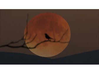 21. Yüzyılın En Uzun 'Kanlı Ay' Tutulması Cuma Günü Yaşanacak