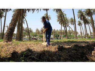 Kuraklık 'İki Nehir Ülkesi' Irak'ta Tarımı Bitirmek Üzere