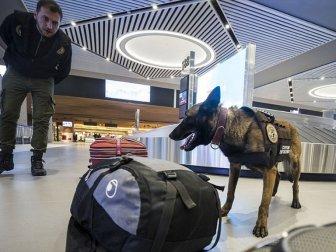 Banknot Dedektör Köpeği 'Janti'den Kaçış Yok