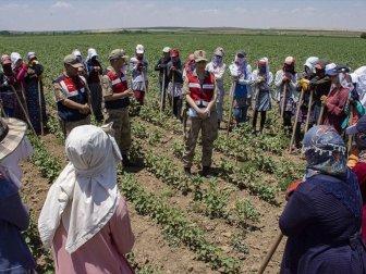 Mevsimlik İşçiler Jandarmanın Takibinde