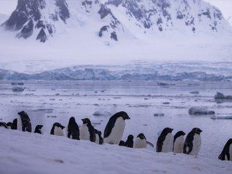 'Sanayileşmenin Etkilerinden Antarktika Kıtası da Payını Aldı'