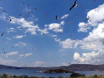 Çıldır Gölü Yavru Kuşlarla Şenlendi