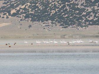 Flamingoların Değişmeyen Durağı: 'Yarışlı Gölü'