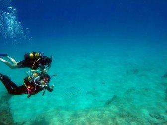 Akdeniz Ülkeleri Tropikleşiyor, Zehirli Balıklar Çoğalıyor