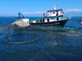 Çin'e Su Ürünleri İhracatı Başlıyor