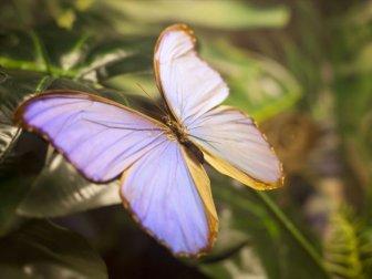 Fotoğraf Tutkunları İçin Doğal Stüdyo 'Kelebek Bahçesi'