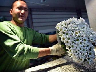 Çiçek Mezatlarında '14 Şubat' bereketi