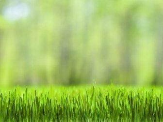 Bahçedeki çimleri yeşerten doğal gübre