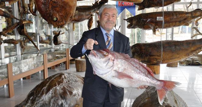 Cumhurbaşkanı Erdoğan'a Dev Mercan balığı!