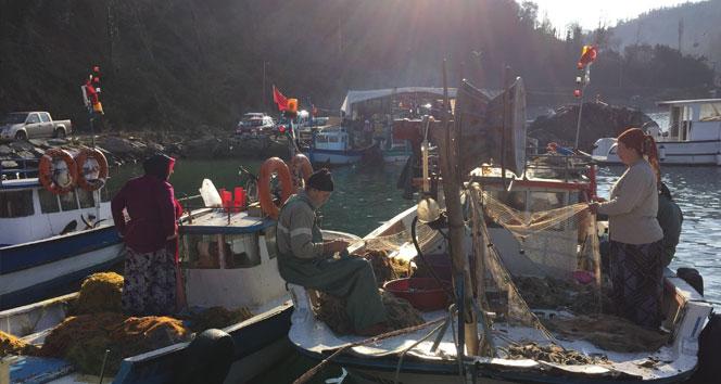 Karadeniz'de 14 yeni balık türü