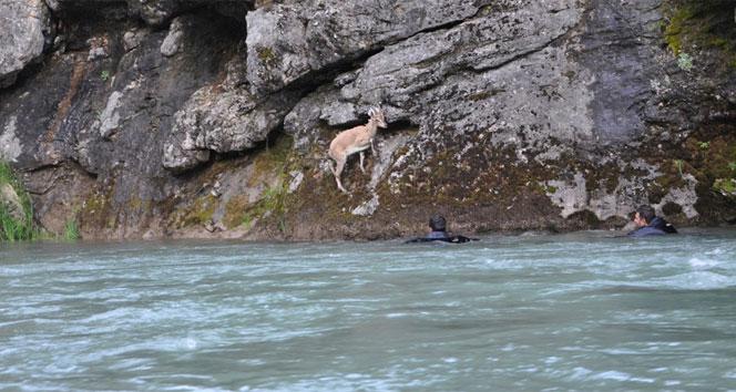 Mahsur kalan keçiyi dalgıçlar kurtardı