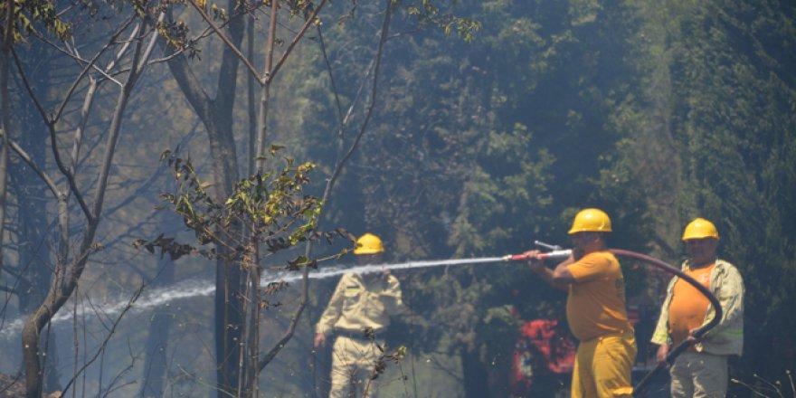 Aliağa'da korkutan orman yangını!