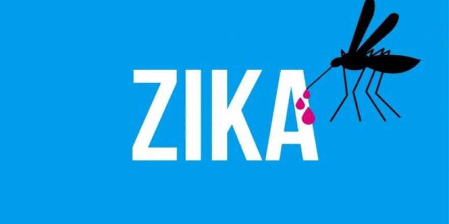 Zika virüsü ev sineklerinde tespit edildi!