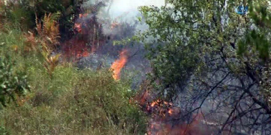Kocaeli, Başiskele'de 20 dönümlük ormanlık alan kül oldu