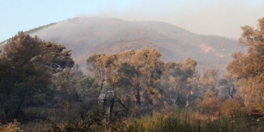 İzmir'de mangal aşkı 30 hektarlık alanı kül etti
