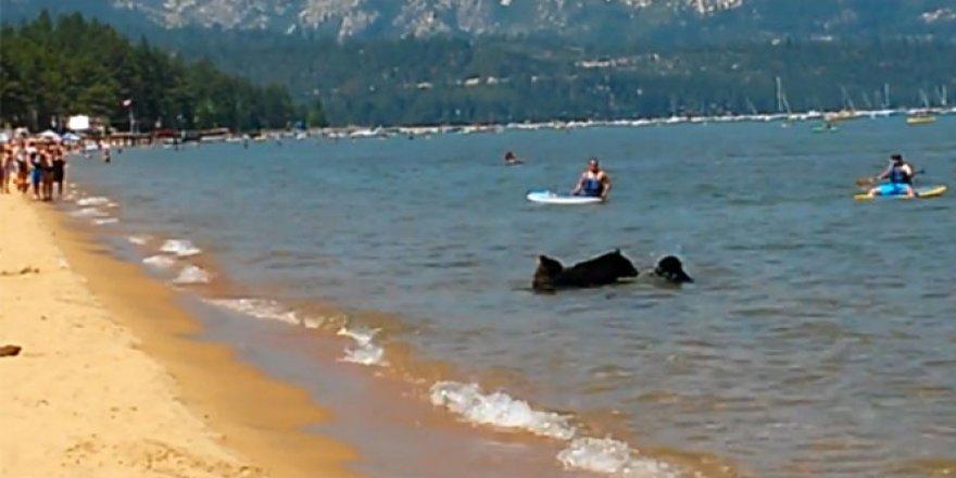 Gölü ayılar bastı
