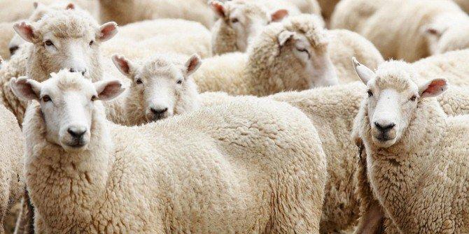 Tekirdağ'da Kurbanlık Hayvan Baskül Fiyatları Belirlendi