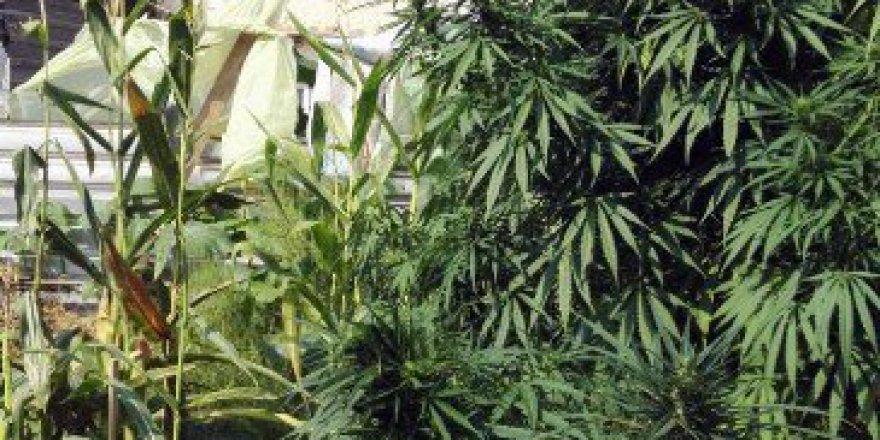 İnegöl'de Jandarmadan Uyuşturucu Operasyonu