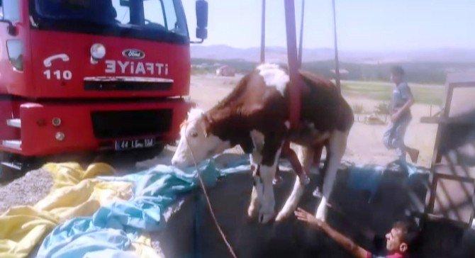 Malatya'da Kuyuya Düşen İneği İtfaiye Kurtardı
