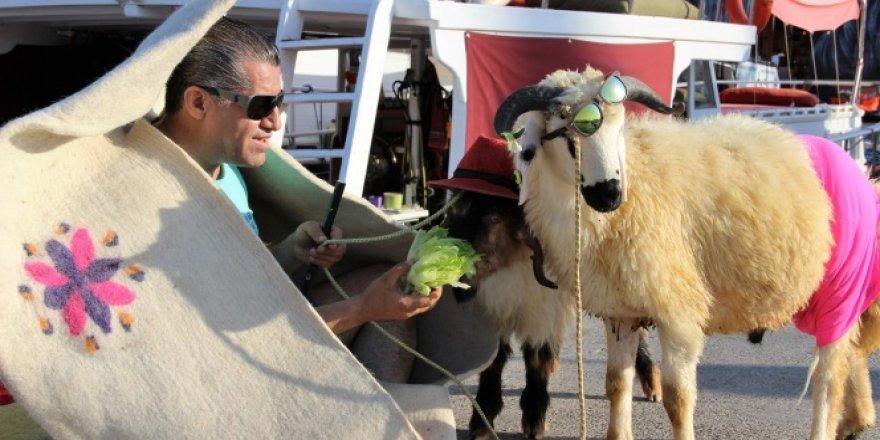 Ünlü şarkıcı kurbanlık koyunlarla lüks yata bindi!