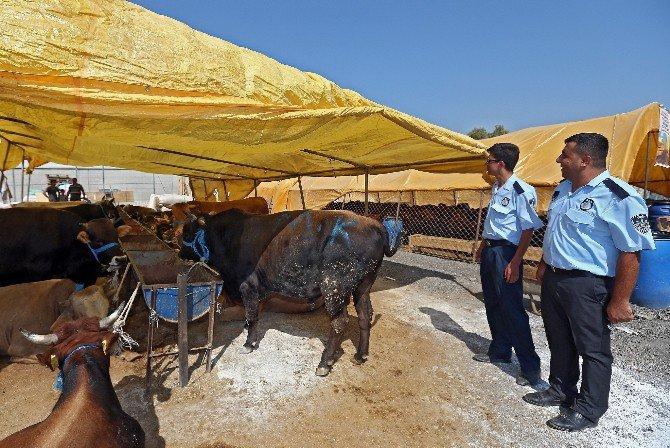 Kona Belediyesi uyarıyor : Kurban Keserken Ceza Yemeyin