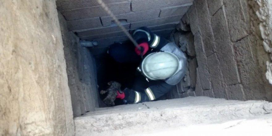 Gaziantep'te 35 metrelik kuyudan yavru kediyi böyle kurtardılar