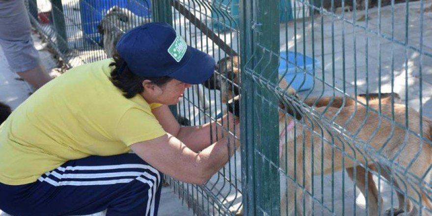 Aydın, Didim'de Hayvanseverler Sokak Hayvanlarıyla Buluştu