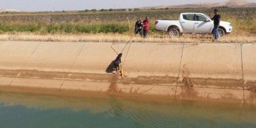 Şanlıurfa'da Kanala Düşen Köpek İtfaiye Ekiplerince Kurtarıldı