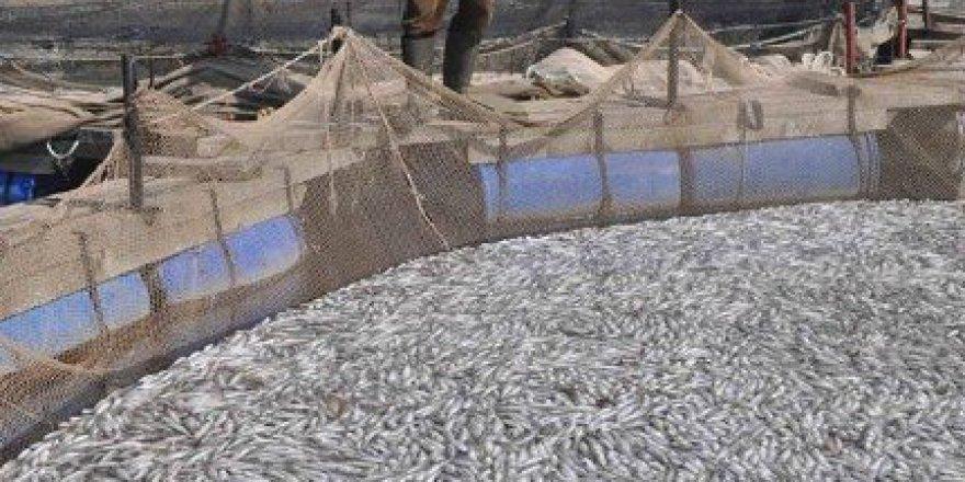 Denizli, Çivril'de Atık Sular 1,5 Milyon Balığı Telef Etti!