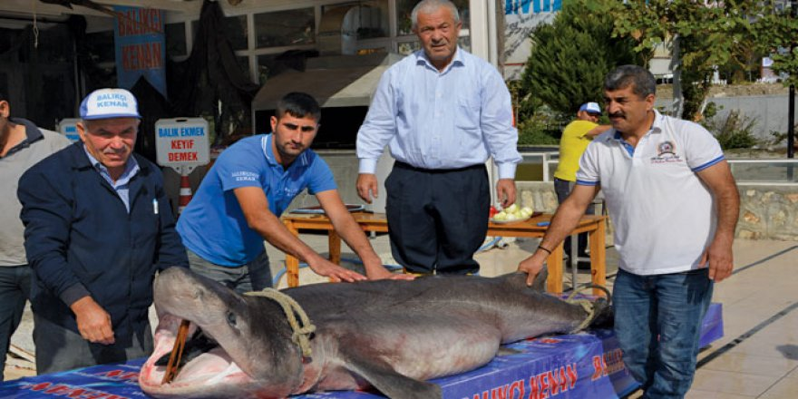 Kanser hastalarına köpek balığından gelen şifa!