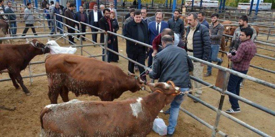 Erzincan'da Genç Çiftçilere Bakanlıktan Hibe Hayvan Dağıtımı