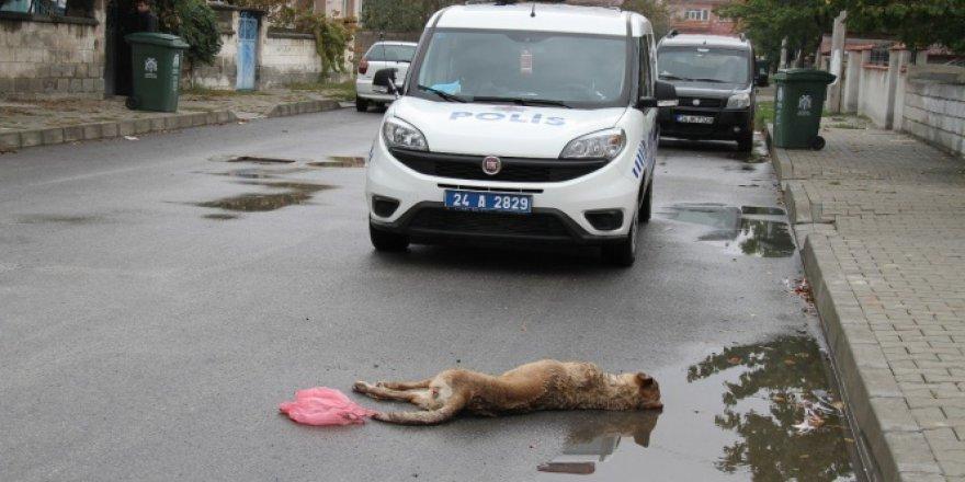 Çocuklara saldıran 2 sokak köpeği öldürüldü