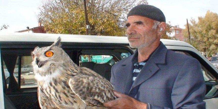 Yaralı 'Puhu' Kuşuna Vatandaşlar Sahip Çıktı