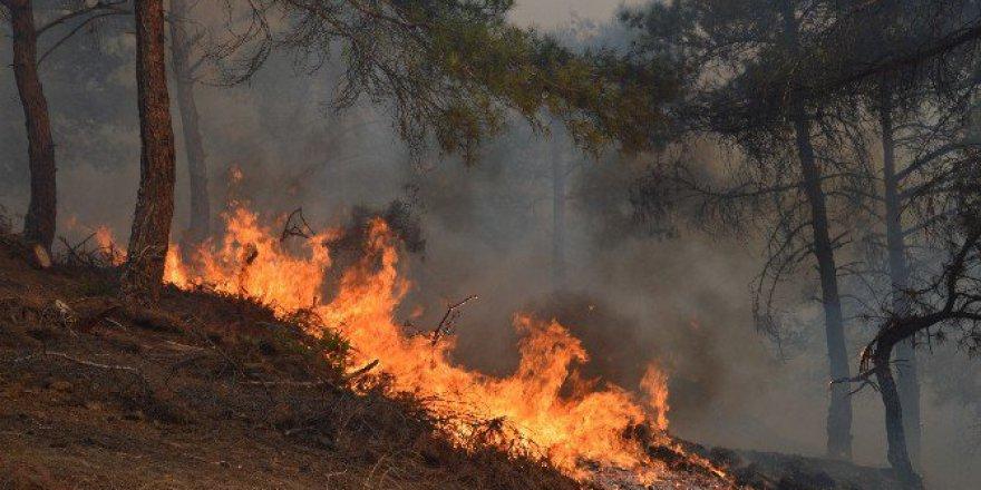 Tokat, Niksar'da Orman Yangını