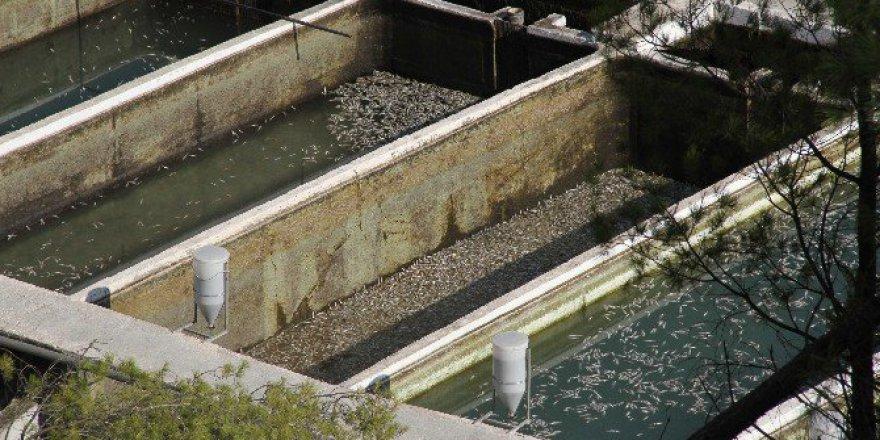 Muğla, Seydikemer'de Milyonlarca Balık Telef Oldu