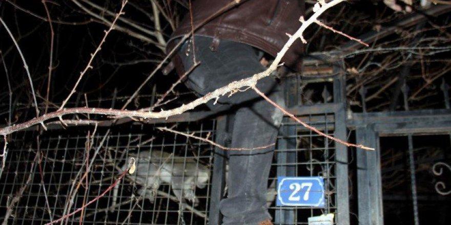 Talas'ta Maymun Yakalama Operasyonu