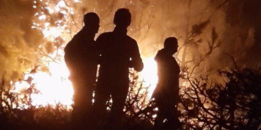 Bolu, Gerede'deki Orman Yangını Kontrol Altına Alındı