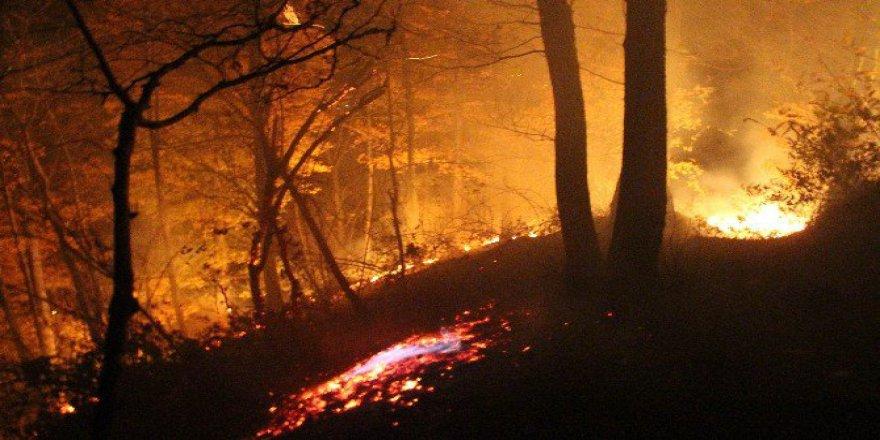 Ordu, Perşembe'de Orman Yangını