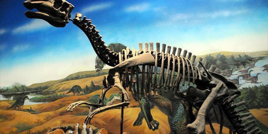 Dinozorların Yumurtadan 3 İla 6 Ayda Çıktığı Belirlendi
