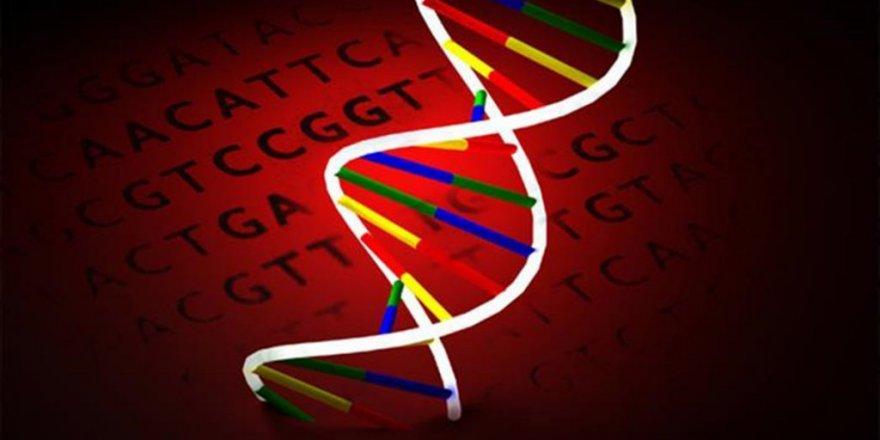 California Üniversitesi; Kültürel Farklar İnsan DNA'sına Mührünü Vuruyor