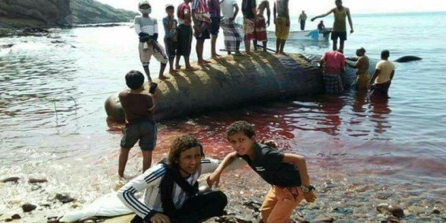 Aden'de bulunan Amber Balinası balıkçıları şok etti!