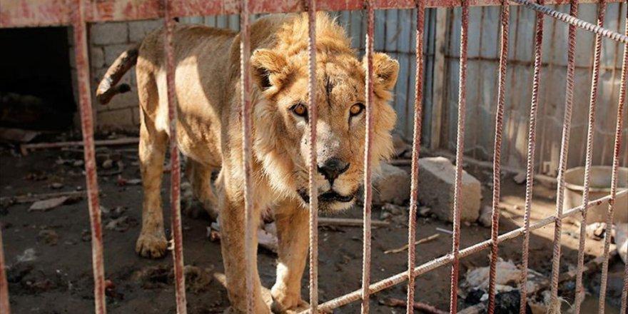 Musul'da Hayvanlar Da Deaş Kurbanı oldu