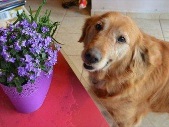 Evcil Hayvanı olanlar bu bitkilere dikkat