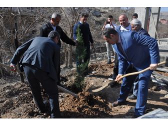 Saklı Köyünde Ağaçlandırma Çalışması