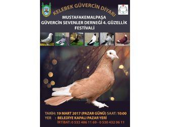 M. Kemalpaşa'da Güvercin Festivali