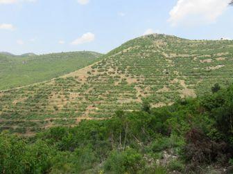 Kayseri'de 3 Milyon 664 Bin Adet Fidan Toprakla Buluşturuldu