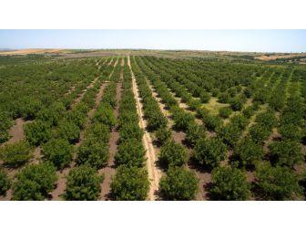 Ogm Çorum'da 3 Milyon 997 Bin Fidanı Toprakla Buluşturdu