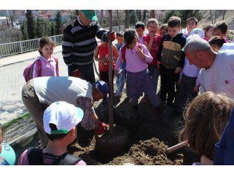 Orman Haftası Vezirhan'da Ağaç Dikilerek Kutlandı