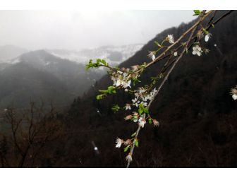 Giresun'da Kış Ve Bahar Bir Arada
